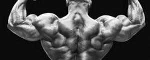 l'angolo del fitness scheda massa